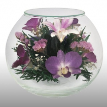 нежные орхидеи BMO