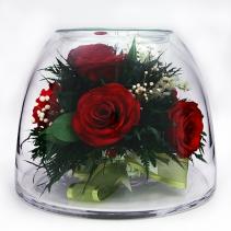 Розы под куполом 40-658-FIORA