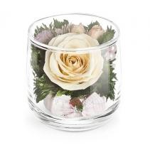 Роза в стаканчике Лира 46-575
