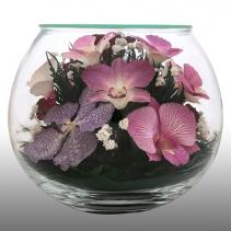 Композиция из натуральных орхидей BLO