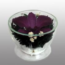 орхидея-соло CuSO