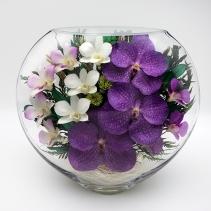 Крупные орхидеи ELO09