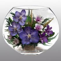 фиолетовые орхидеи EMO-03