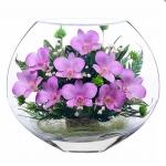 орхидеи фиалкового цвета