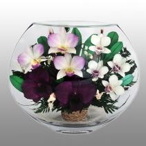 нежные орхидеи EMO-09
