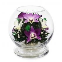 Орхидеи в устойчивом шаре MMO-1