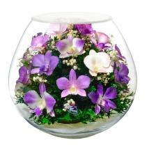 объемные орхидеи BBO-new