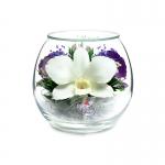 Нежная орхидея BMIO1