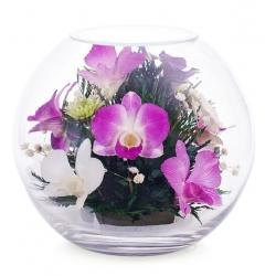 Нежные орхидеи BNO