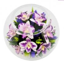 Королевские орхидеи BNO2