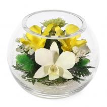 Орхидеи в шаре BSM1