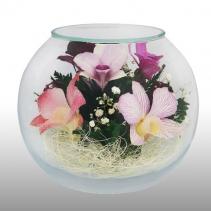 розово-фиолетовые орхидеи BSO
