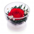 Одна роза Соло малое CuSr1