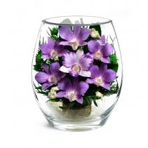 Орхидеи EHO-01