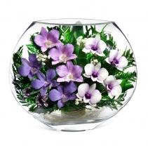 Орхидеи в плоской вазе EMO-10