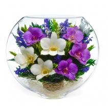Белые и фиолетовые орхидеи ESO-02