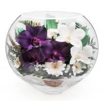 ESO-04, нежные орхидейки
