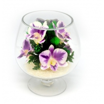 Орхидеи в бокале GLO2