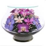 фиолетовые орхидеи  LLO
