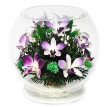 Орхидеи в шарообразной вазе MLO