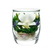 Нежная орхидея SMO3