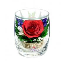 Яркая роза SMR
