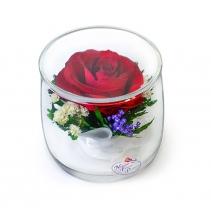 Одна роза Соло малое SSR