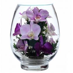 Орхидеи VSO